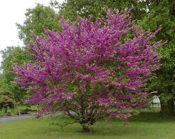 arbre de l'amor