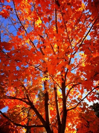 fall-tree-care